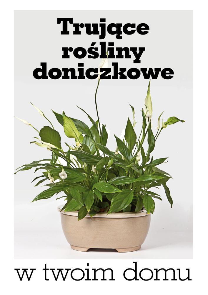 Trujące rośliny w twoim domu